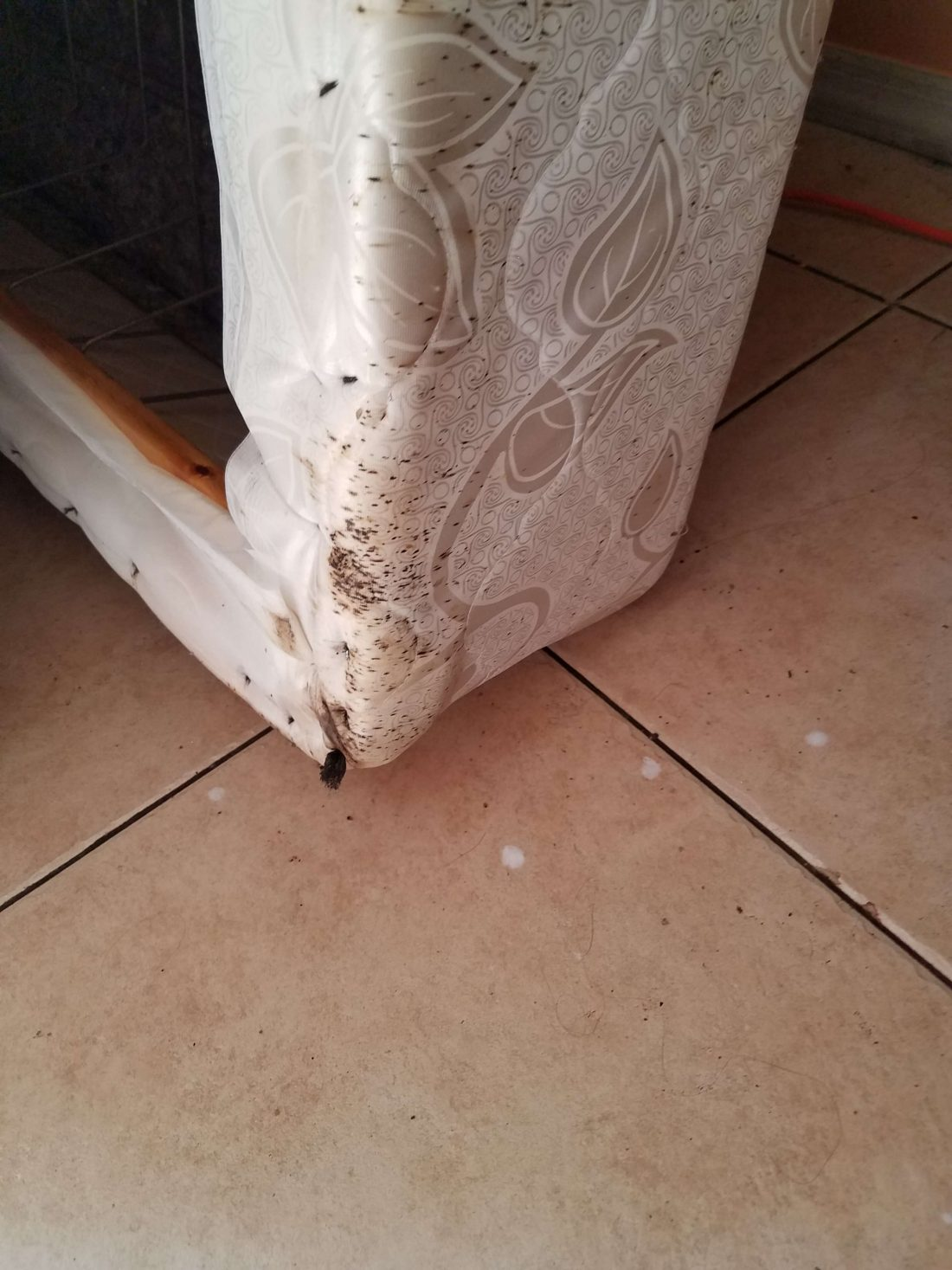 bed bug stains on the edge of box spring