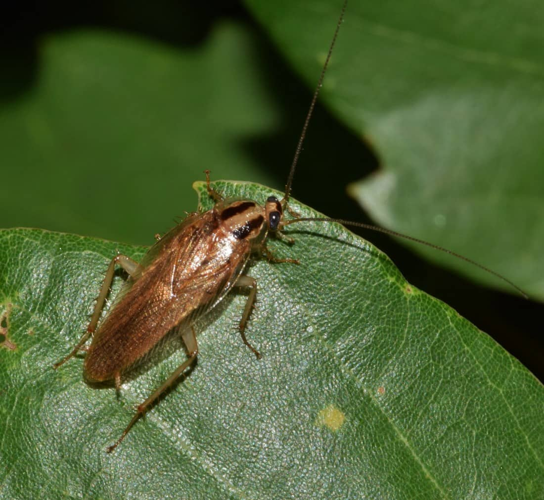 Common Bugs, Identifying Infestation Problems During Winter, Control Exterminating Pest Control, Control Exterminating Pest Control Manhattan, Control Exterminating Pest Control NYC, Control Exterminating Pest Control New York City, Pest control services, NYC, Queens, Manhattan, New York City, New York, Pest Control, Exterminator, Brooklyn, Bronx, Staten Island, NY, exterminator, bugs, bed bugs, organic pest control, organic exterminator, organic pest, Termite Infestation, rat, rodent, mouse, rodents, A Rodent Infestation Can Be Hazardous to Your Health