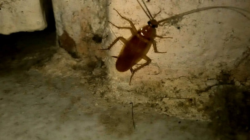 Cockroaches, NYC Roach, Control Exterminating Pest Control, Control Exterminating Pest Control Manhattan, Control Exterminating Pest Control NYC, Control Exterminating Pest Control New York City, Pest control services, NYC, Queens, Manhattan, New York City, New York, Pest Control, Exterminator, Brooklyn, Bronx, Staten Island, NY, exterminator, bugs, bed bugs, organic pest control, organic exterminator, organic pest, Termite Infestation, rat, rodent, mouse, rodents, Why You Shouldn't Ignore a Cockroach Problem