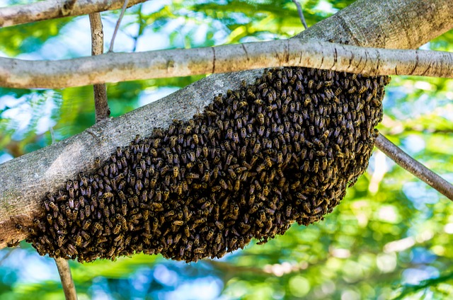 a bee colony on tree
