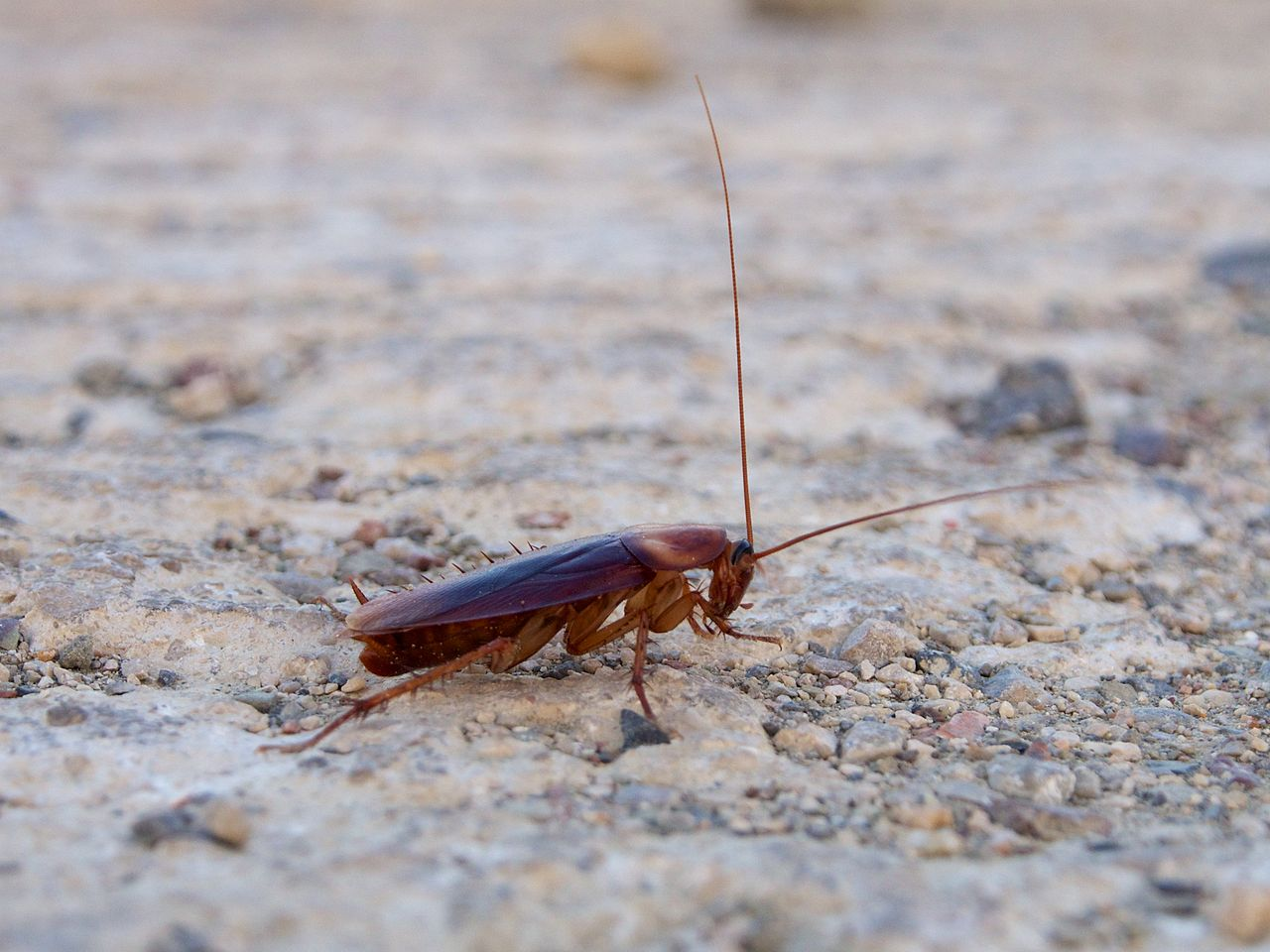 DIY Roach Removal: Best Ways to Get Rid of Roaches in Your Apartment