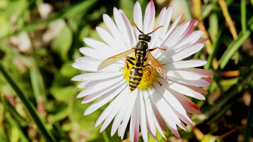 a paper wasp on a flower