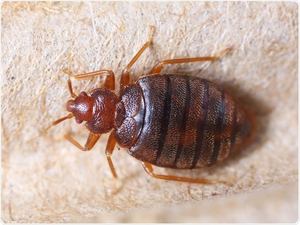 Bed Bug Treatment: Preparation & Process of Treating Bed Bugs