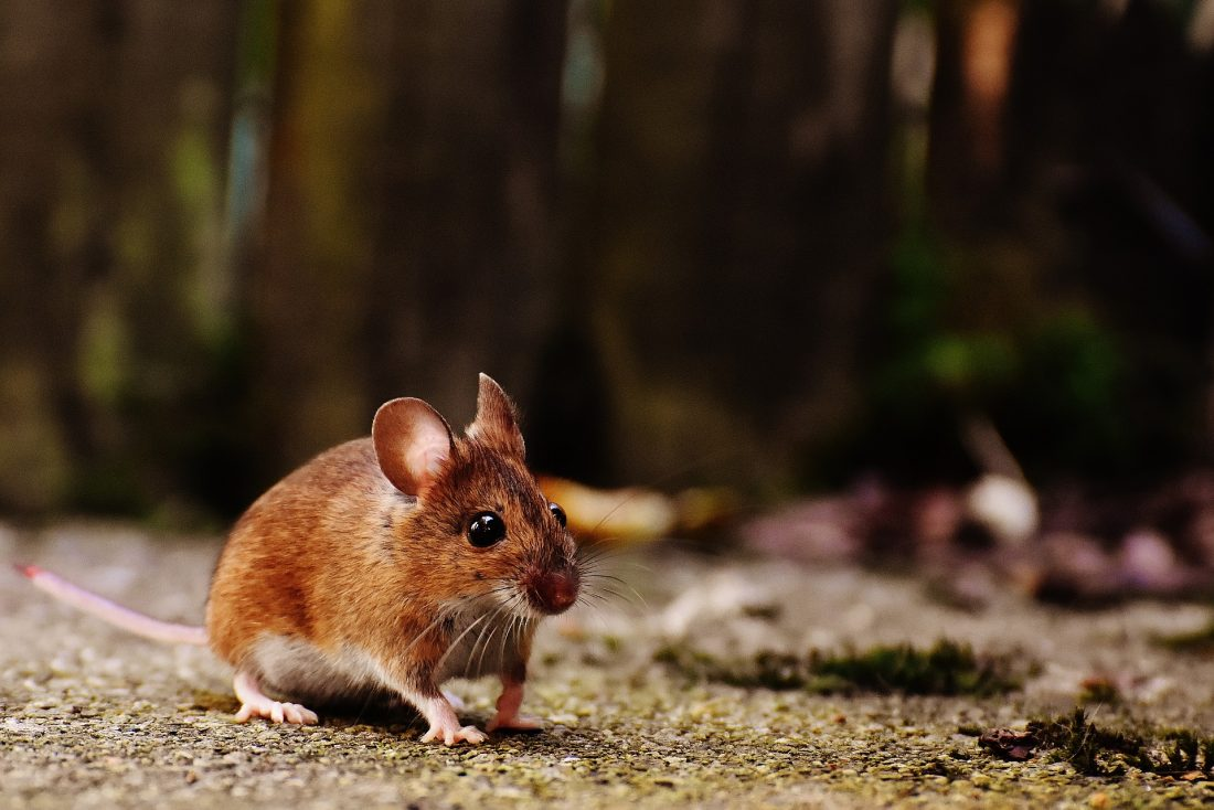 a mouse on the ground