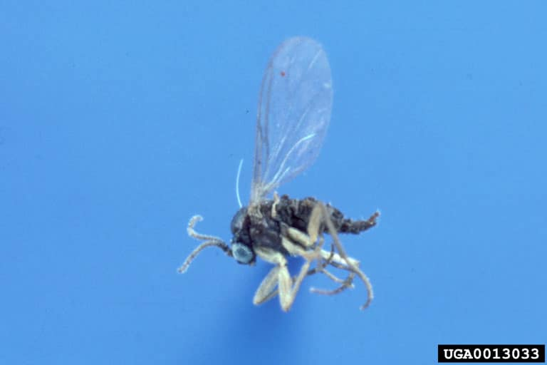 a gnat in blue background