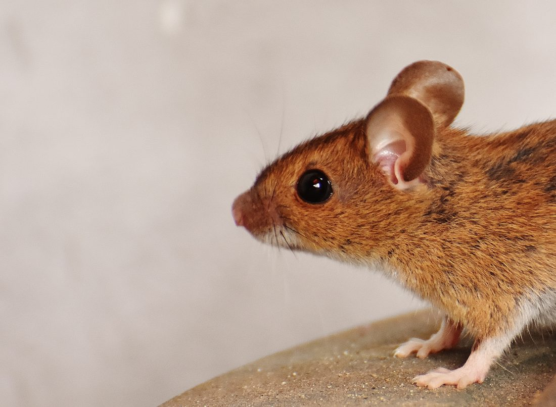 How to Catch a Mouse: Killing It vs. Keeping It Alive, Control Exterminating