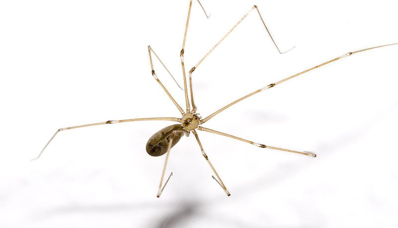 Spiders in New York: How to Identify Six Common NY Spiders