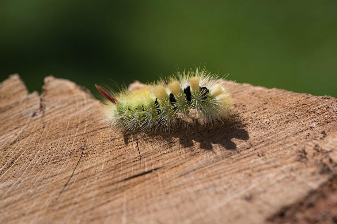 a caterpillar on wooden material