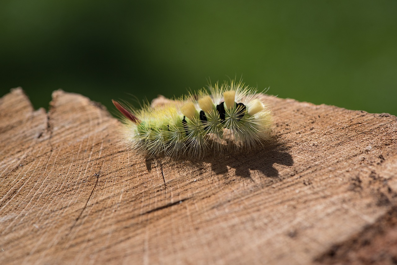 6 Common Garden Pests that Are Causing Trouble in Your Yard