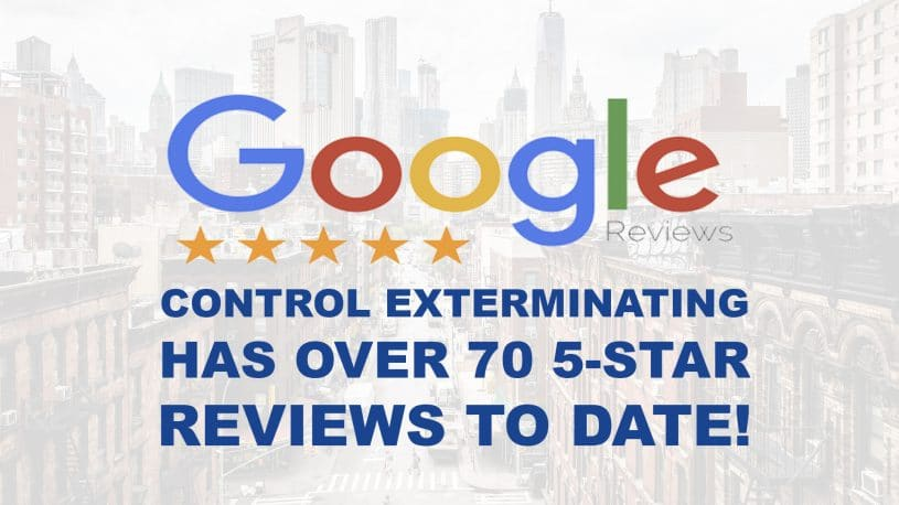 image of Google Reviews