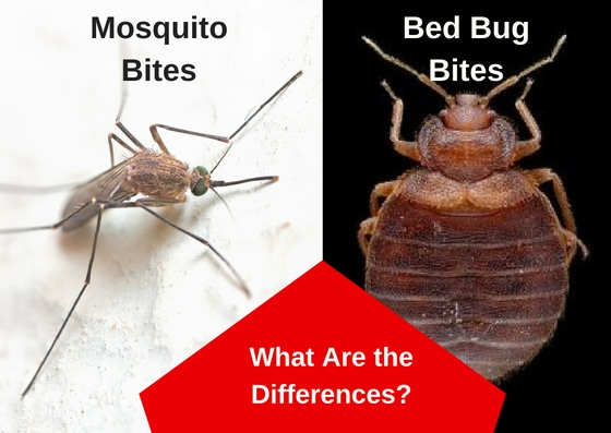 Mosquito Bites vs. Bed Bug Bites: What You Need to Know image