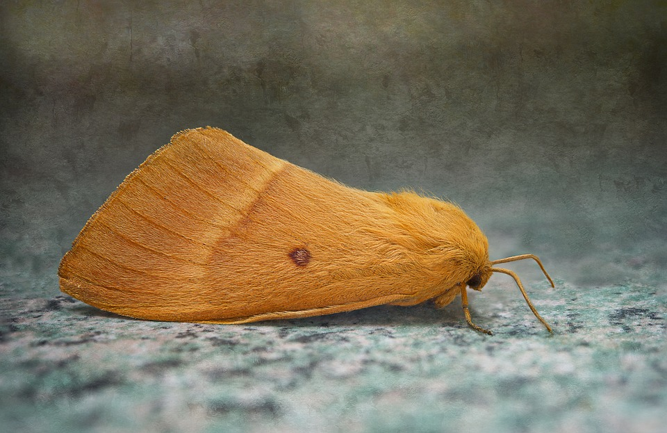 moth on the floor
