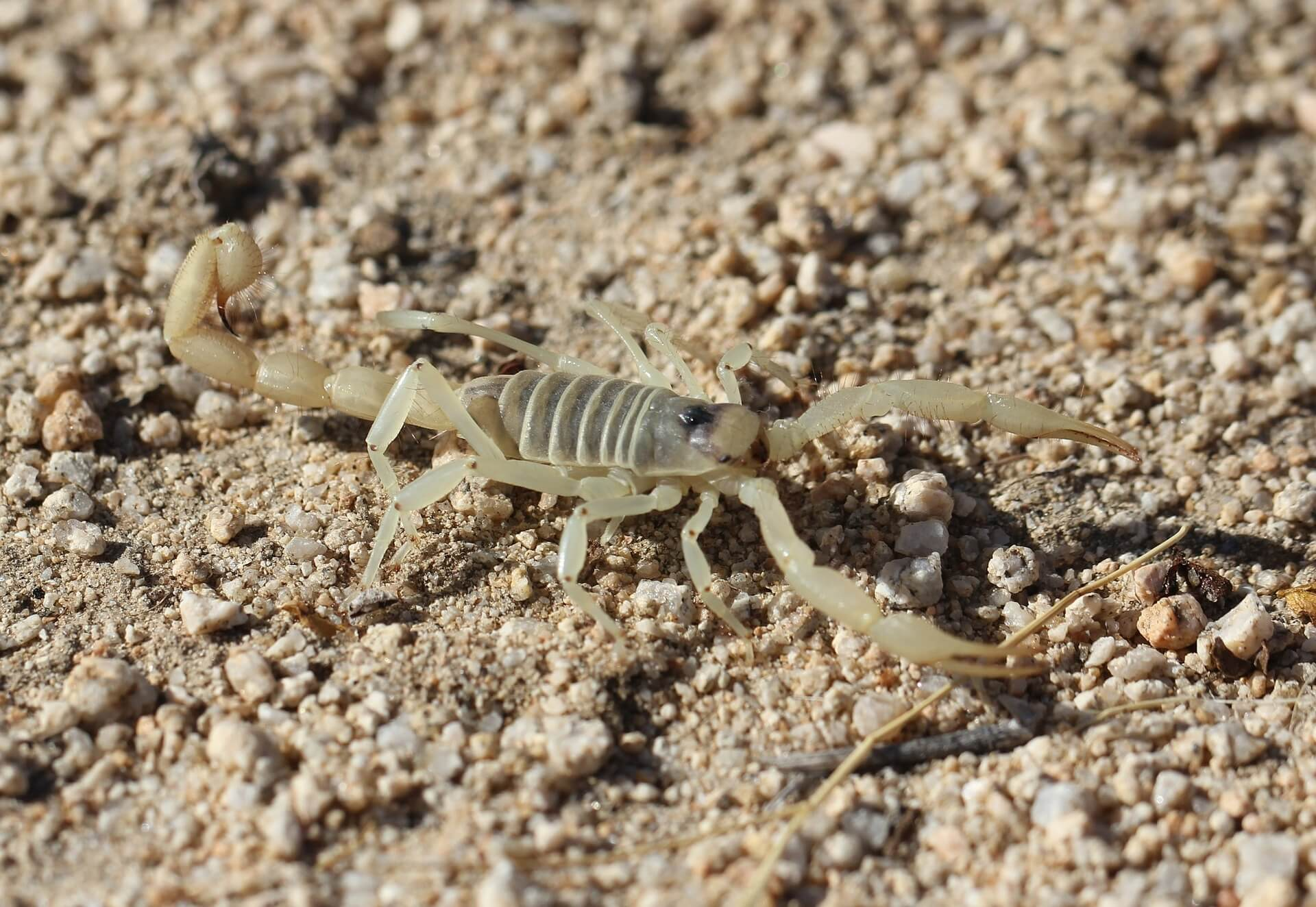 scorpion on stony ground
