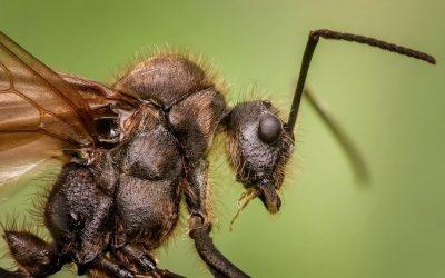 Types of Ants