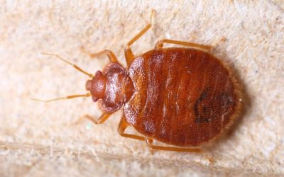 8 Most Common Household Pests in NYC