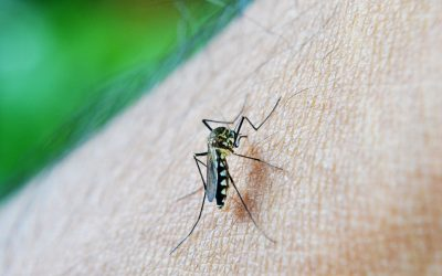 Mosquito Bites vs. Bed Bug Bites