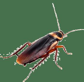 Water Bug Exterminator Nyc Control Exterminating Company